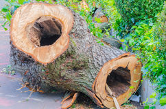 Hollowed-out tree trunk Stock Photo