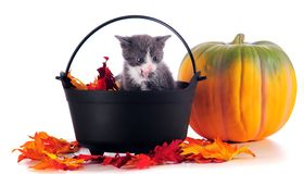 Holloween Kitten Stock Image