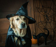 Holloween Witch Stock Images