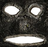 Hollows on the bark of a tree in the form of a face royalty free stock photography