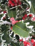 Holly στο wintertime Στοκ Φωτογραφίες