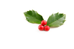 Holly. Leaves with red berries on a white background with room for your text stock photography