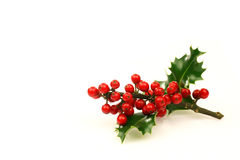 Holly. Branch of holly with red berries on a white background Stock Images