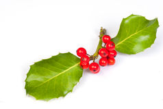 Holly stock photography