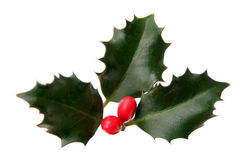 Holly. Leaves and Berries - isolated stock photo