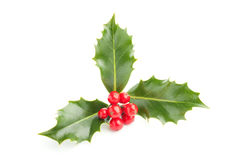 Holly. Christmas Holly (Ilex) with red berries, isolated on white royalty free stock images