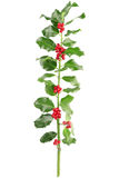 Holly. Branch isolated on white, clipping path included Stock Photos
