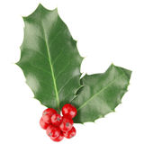 Holly. Isolated on white, clipping path included Royalty Free Stock Photos
