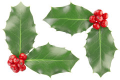 Holly. Border isolated on white, clipping path included royalty free stock photo