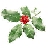 Holly. Isolated on white, clipping path included Royalty Free Stock Image