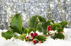 Holly. With red berries in snow with sparkling background royalty free stock photography