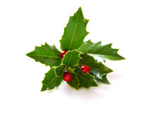 Holly. Real Holly branch cutting with artificial red berries stock images