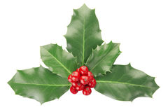 Holly. Isolated on white, clipping path included Stock Image