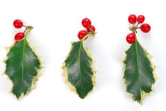 Holly. With red berries isolated on white background royalty free stock photography