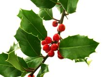 Holly. Branch Stock Photography