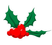 Holly. Christmas holly with eight berries Royalty Free Stock Images