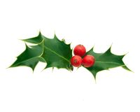 Free Holly Royalty Free Stock Images - 48109599