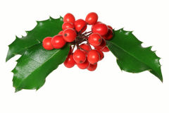 Holly. Ilex aquifolium - Branch of Holly with red berries, isolated on white royalty free stock photo