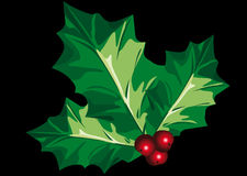 Holly. Abstract vector illustration of holly leafs over a black background Royalty Free Stock Photos