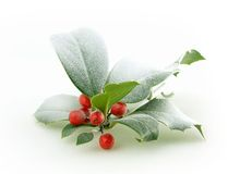 Holly Royalty Free Stock Photography