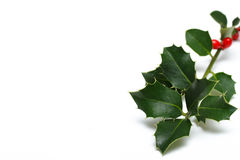 Holly background Stock Photography