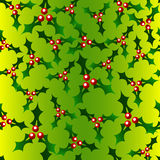 Holly Background Royalty Free Stock Image