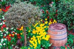 Holly Barrel Stock Photos