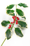 Holly with berries Royalty Free Stock Photos
