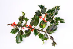 Holly with berries Royalty Free Stock Photo