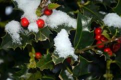 Holly Berries bedeckte mit Schnee Stockbild