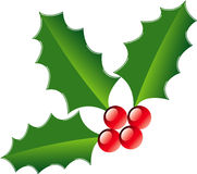 Holly and berries illustration Royalty Free Stock Image