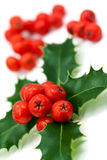 Holly berries and leaves,isolated on white Stock Photos