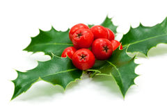 Holly berries and leaves,isolated on white Royalty Free Stock Image