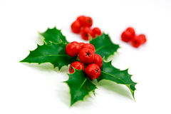 Holly berries and leaves,isolated on white Royalty Free Stock Photo