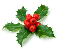 Holly berries and leaves,isolated on white Stock Image