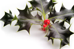 Holly with berries, white background royalty free stock images