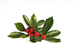 Holly With Berries On White Background. Nice bunch of holly with berries on a white background Royalty Free Stock Photography