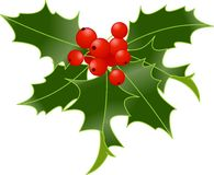 Holly berry. Isolated on white background royalty free illustration