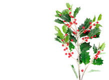 Holly berry Stock Image