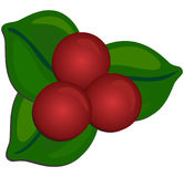 Holly Berry. Traditional Christmas holly berry image Stock Illustration