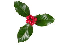 Holly Berry Royalty Free Stock Images