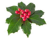 Holly Berry Royalty Free Stock Photography