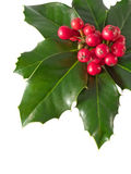 Holly Berry Royalty Free Stock Photo