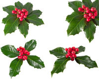 Holly Berry Stock Photography