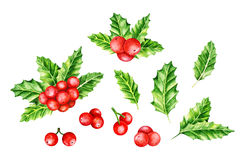 Holly Berry brunch and leaves Stock Images
