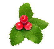Holly berry Christmas decoration Stock Images