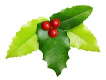 Holly berry Christmas decoration isolated Royalty Free Stock Photos