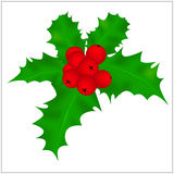 Holly berry, Christmas leaves and fruits icon, symbol, design. Winter vector illustration isolated on white background. Royalty Free Stock Photography