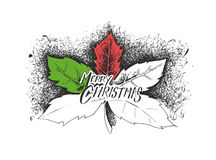 Holly Berry Elements of Christmas decoration. Vector design Stock Images
