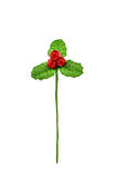 Holly berry fake- Christmas symbol , Christmas & Accessories. is Stock Photography